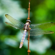 Dragonfly05